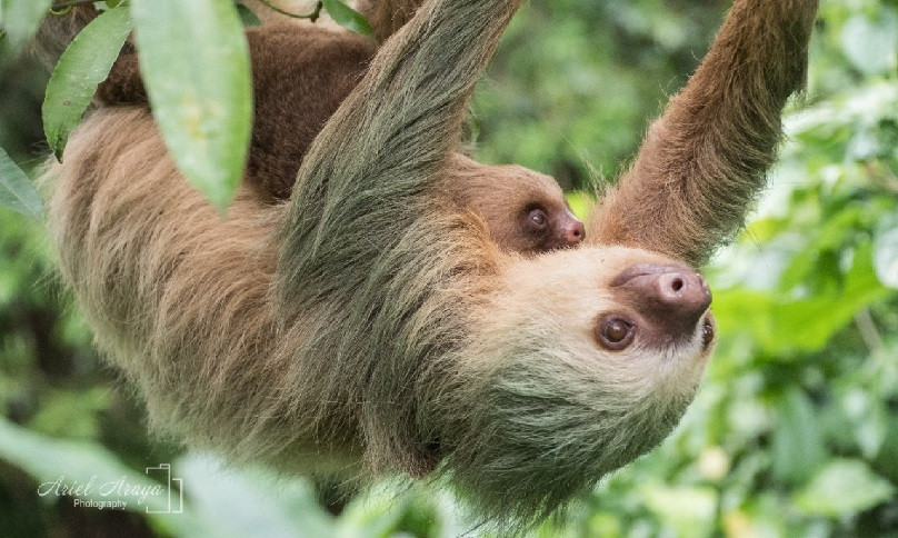 Arenal Sloth Tour