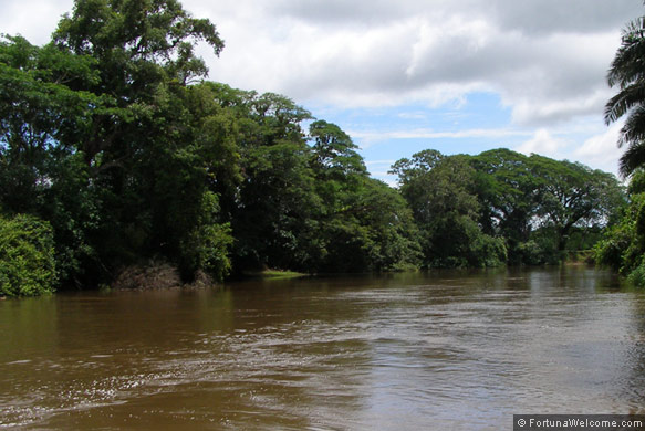 Photos Of Cano Negro Wildlife Refuge Costa Rica